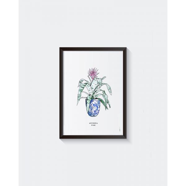 Poster Plant Aechmea pink  A: A4 - 6 stuks