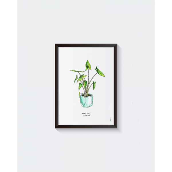 Poster Plant Alocasia Zebrina  A: A4 - 6 stuks