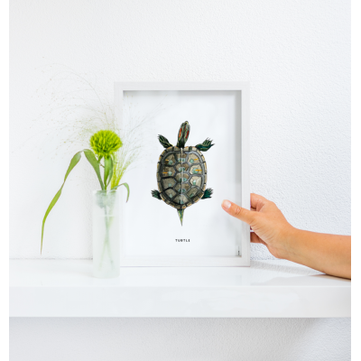 Poster Schildpad A: A4 - 10 stuks