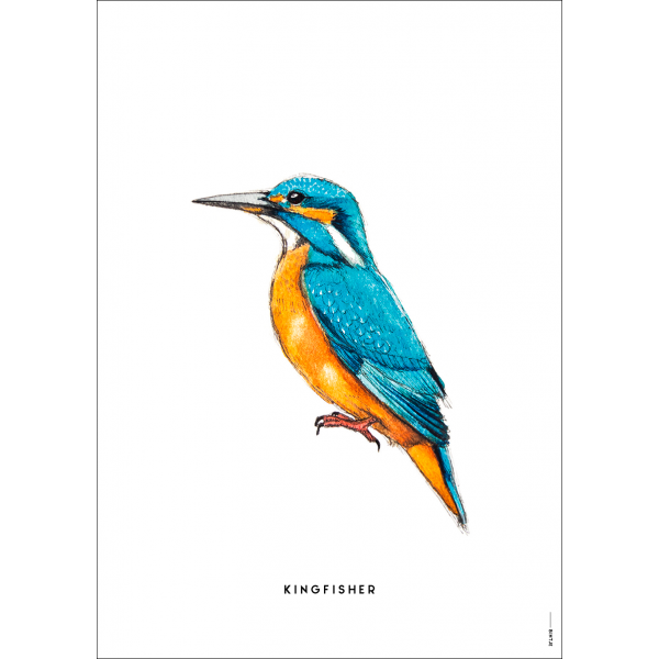 Poster IJsvogel  - 6 stuks