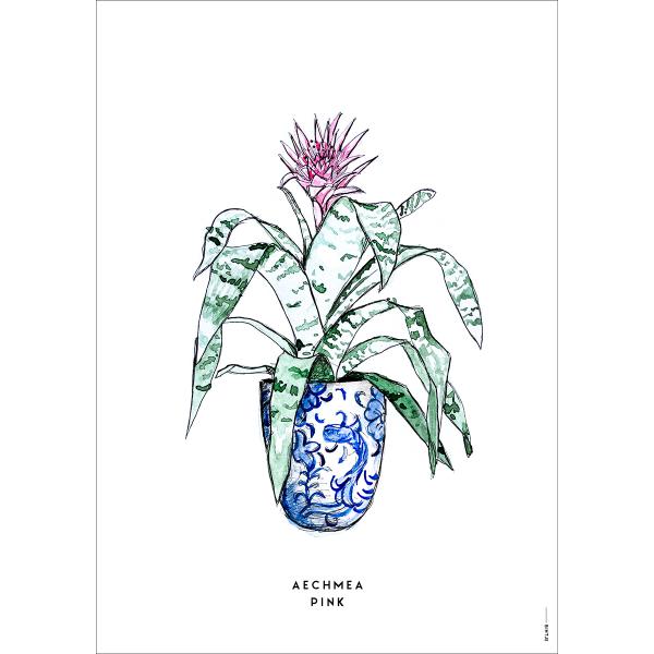 Poster Plant Aechmea  - 6 stuks