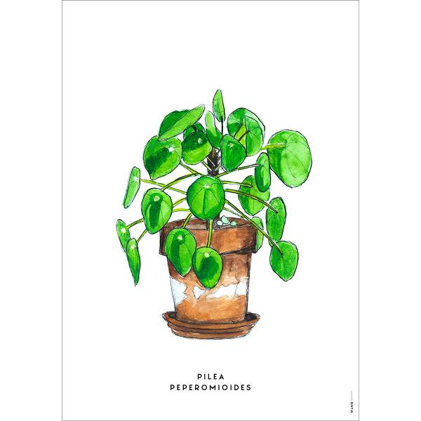 Poster Plant pannenkoek  - 6 stuks
