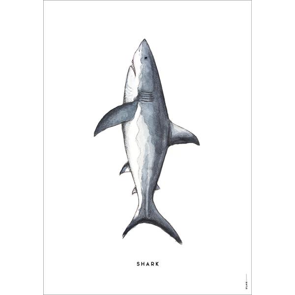 Poster Haai - 6 stuks