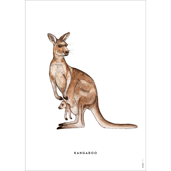 Poster Kangoeroe - 6 stuks