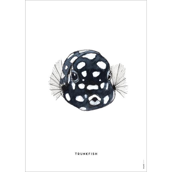 Poster Koffervis - 6 stuks