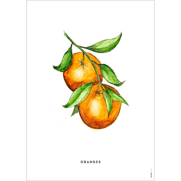 Poster Sinaasappels - 6 stuks