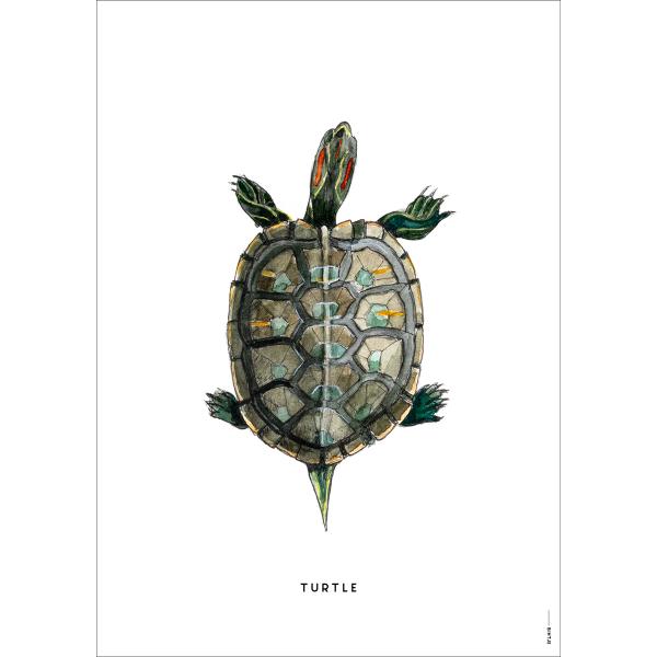 Poster Schildpad - 6 stuks