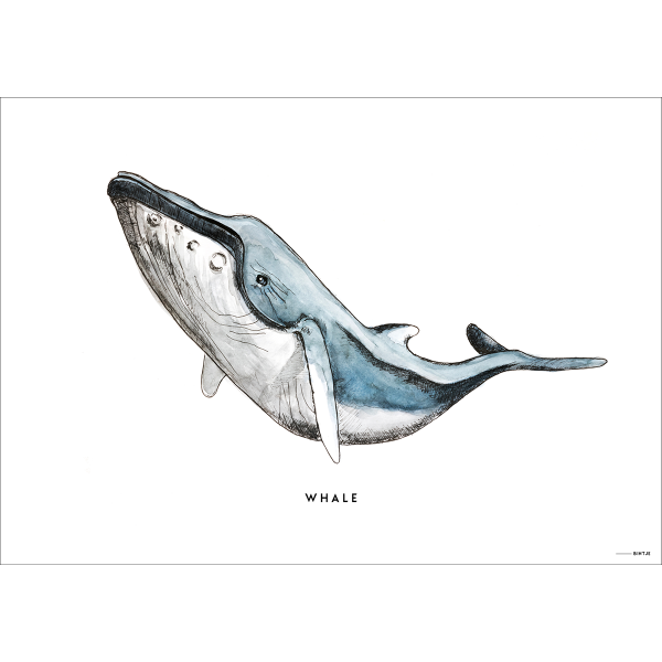 Poster Walvis - 6 stuks
