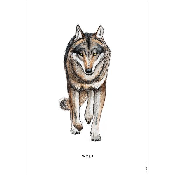 Poster Wolf - 6 stuks
