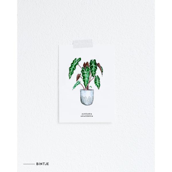 Ansichtkaart Plant Alocasia Amazonica - 10 stuks