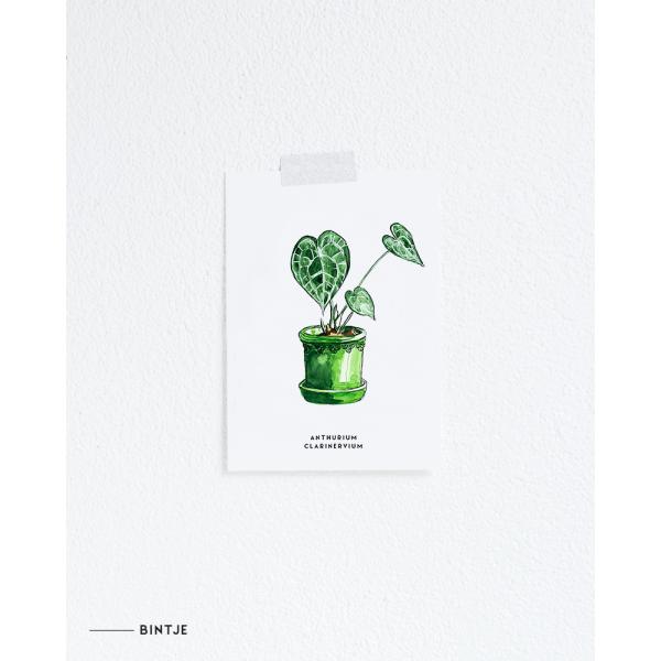 Ansichtkaart Plant Anthurium - 10 stuks