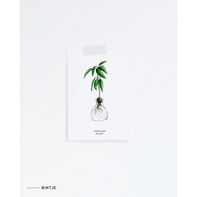 Ansichtkaart Plant Avocado - 10 stuks
