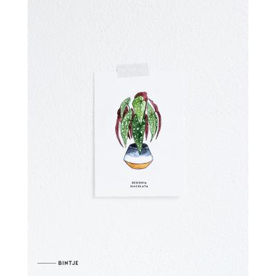 Ansichtkaart Plant Begonia - 10 stuks