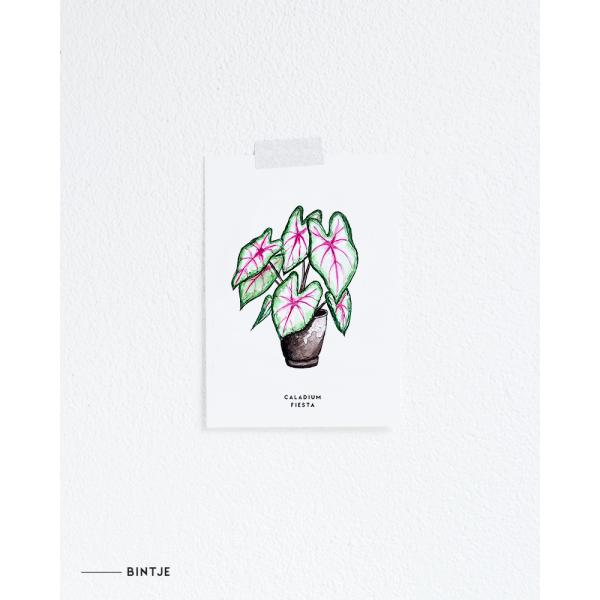 Ansichtkaart Plant Caladium - 10 stuks