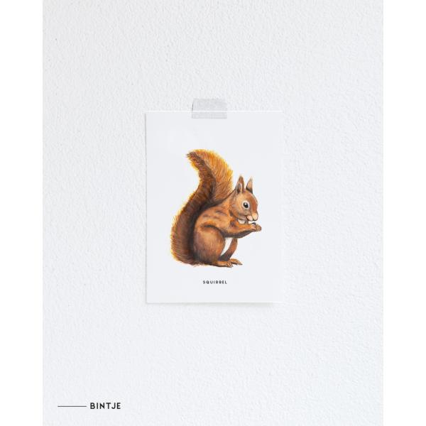 Ansichtkaart Eekhoorn - 10 stuks