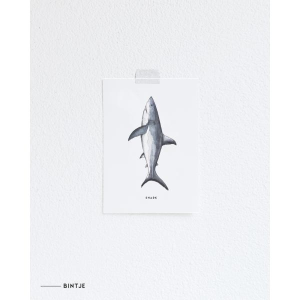 Ansichtkaart Haai - 10 stuks
