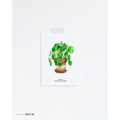 Ansichtkaart Pannenkoekplant - 10 stuks