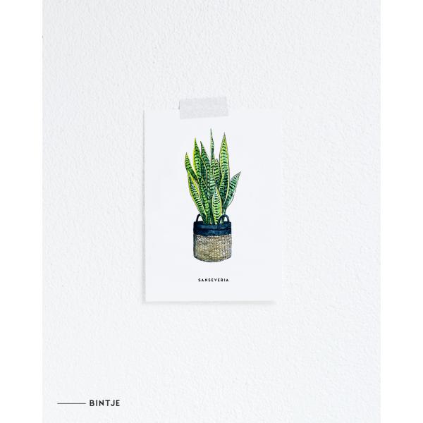 Ansichtkaart Plant Sanseveria - 10 stuks