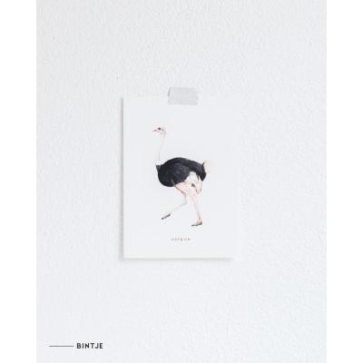 Ansichtkaart Struisvogel - 10 stuks