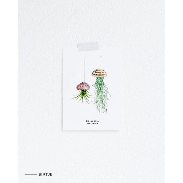 Ansichtkaart Plant Tillandsia Jellyfish - 10 stuks