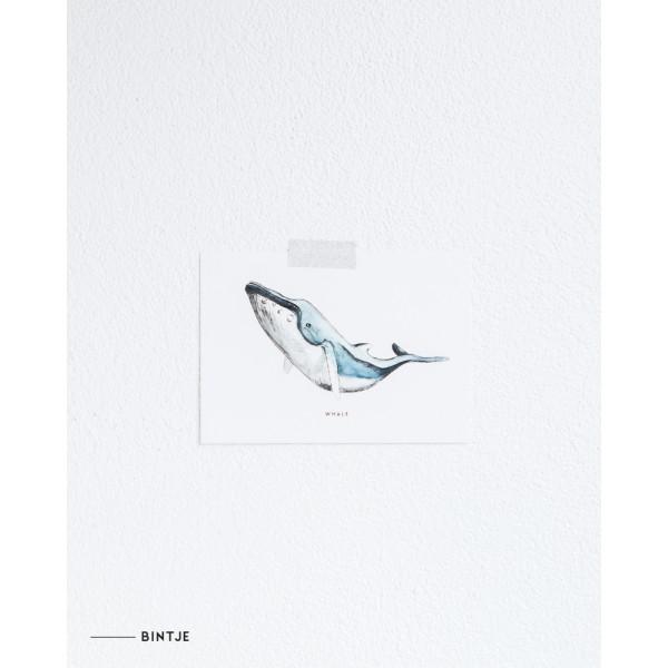 Ansichtkaart Walvis  - 10 stuks