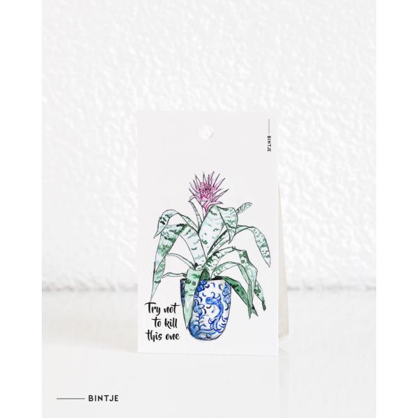 Cadeaukaartjes Plant Aechmea pink - 20 stuks