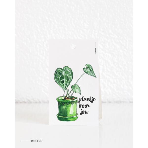 Cadeaukaartjes Plant anthurium - 20 stuks