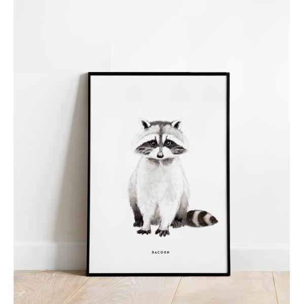 Poster Wasbeer B: 30x40 - 6 stuks