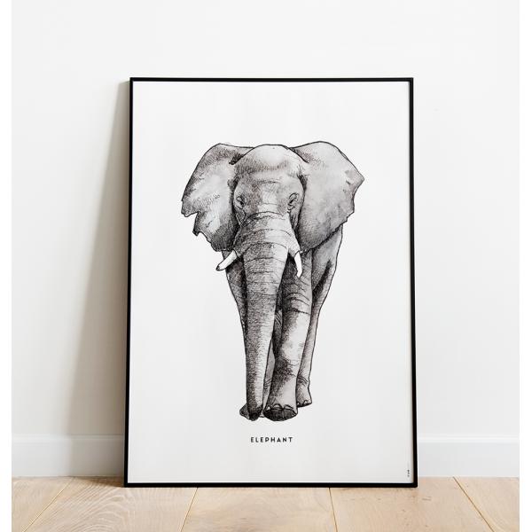 Poster Olifant C: 50x70 - 6 stuks