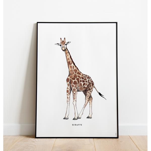 Poster Giraf C: 50x70 - 6 stuks