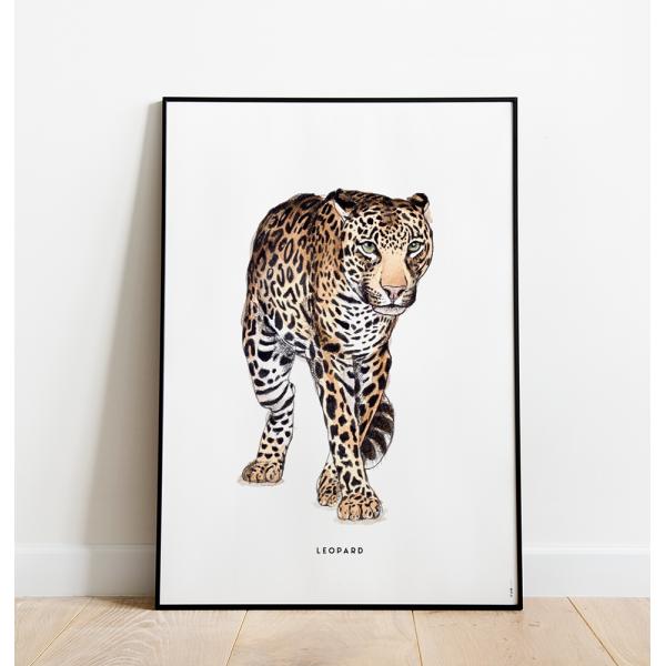 Poster Luipaard C: 50x70 - 6 stuks