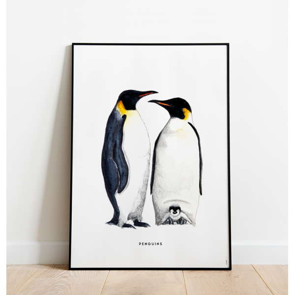 Poster Pinguins C: 50x70 - 6 stuks