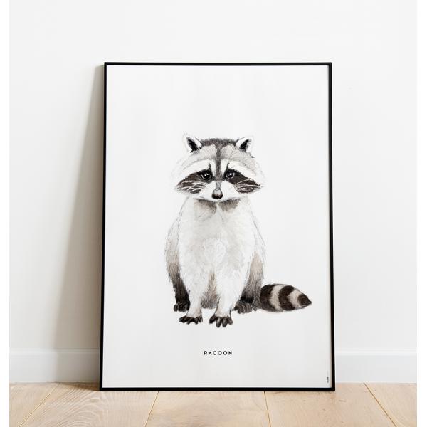Poster Wasbeer C: 50x70 - 6 stuks