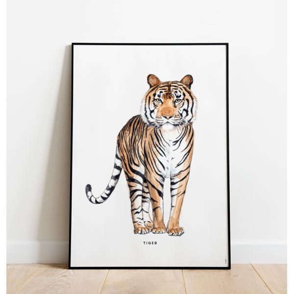 Poster Tijger C: 50x70 - 6 stuks