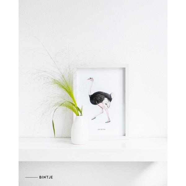 Poster Struisvogel A: A4 - 6 stuks OP=OP