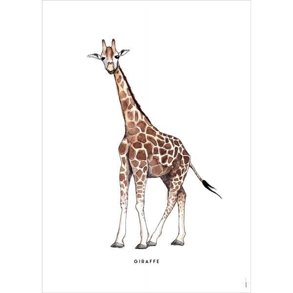 Poster Giraf - 6 stuks