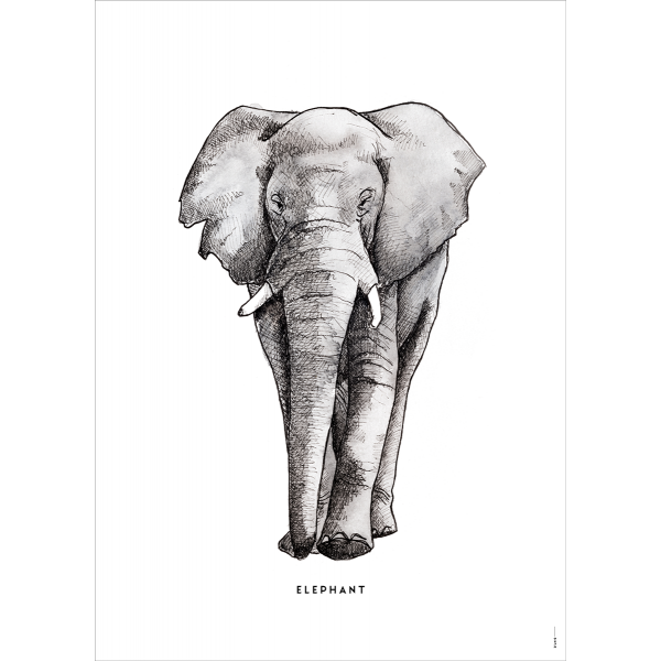 Poster Olifant - 6 stuks