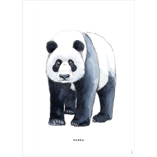 Poster Panda - 6 stuks