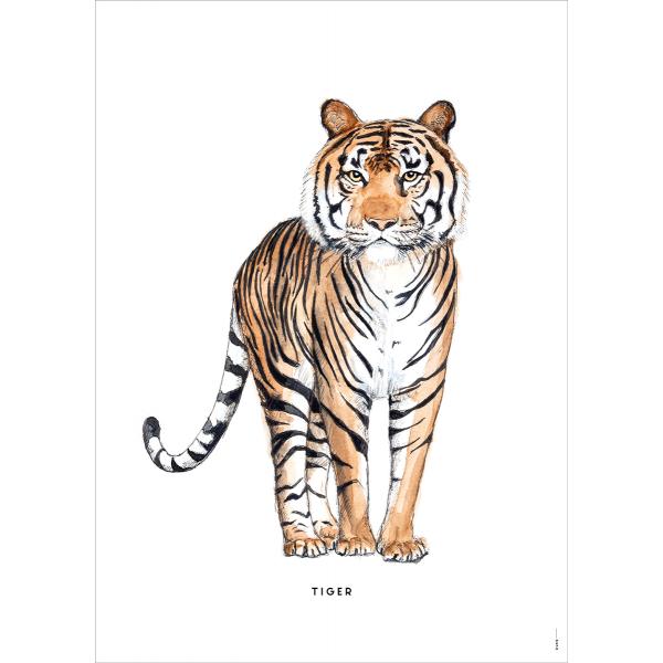 Poster Tijger - 6 stuks