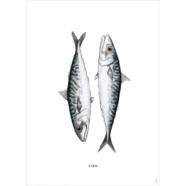Poster Vissen - 6 stuks