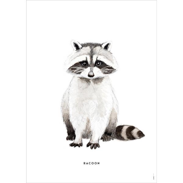 Poster Wasbeer - 6 stuks