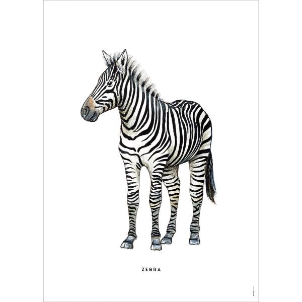 Poster Zebra - 6 stuks