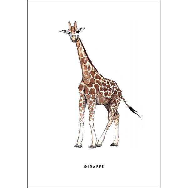 Ansichtkaart Giraf - 10 stuks