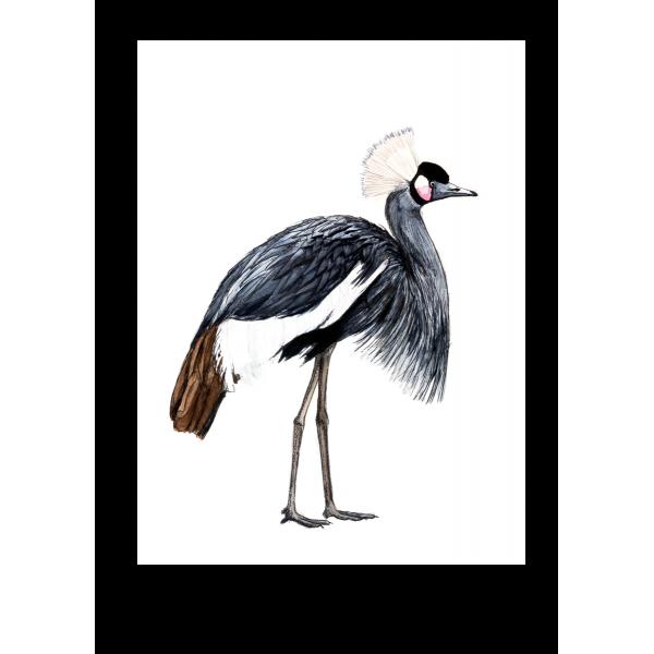 Ansichtkaart Kraanvogel - 10 stuks