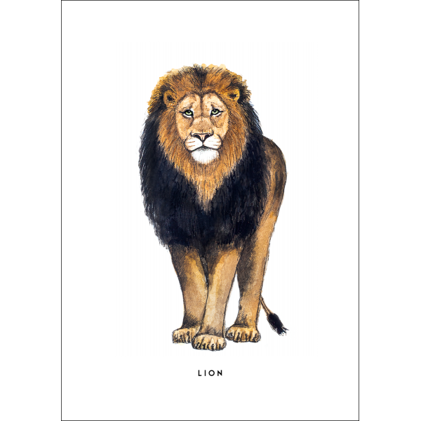 Ansichtkaart Leeuw - 10 stuks