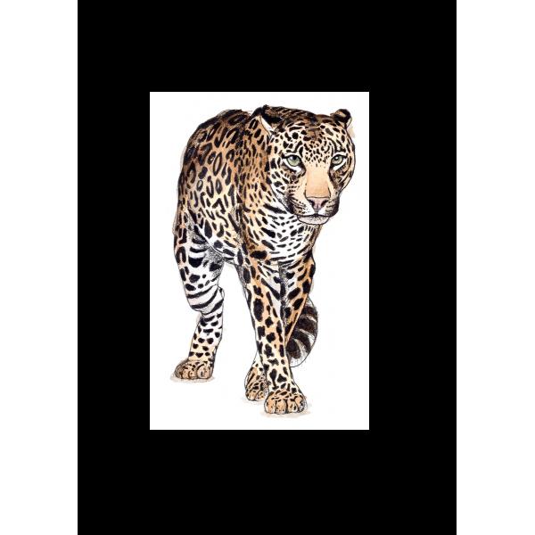 Ansichtkaart Luipaard - 10 stuks