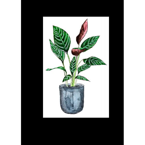 Ansichtkaart Plant Calathea - 10 stuks