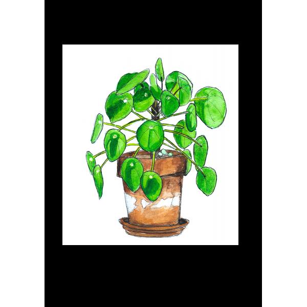 Ansichtkaart Plant Pilea - 10 stuks