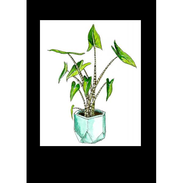 Ansichtkaart Plant Alocasia Zebrina - 10 stuks