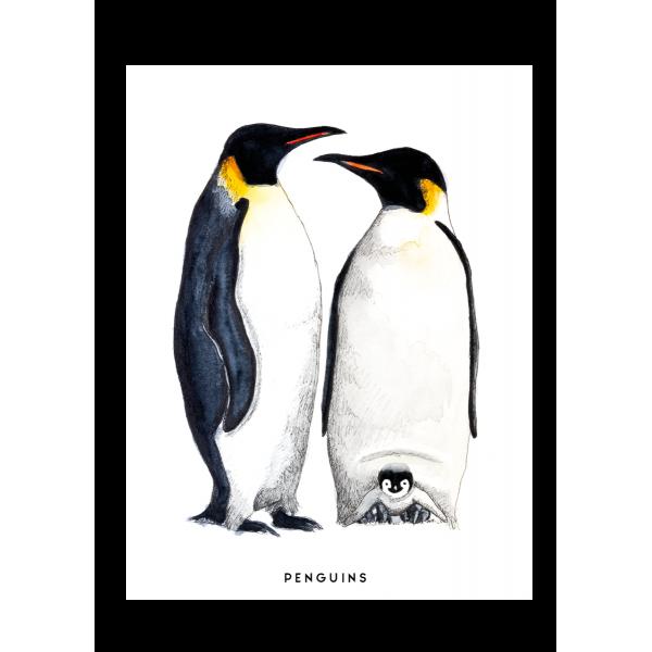 Ansichtkaart Pinguins - 10 stuks